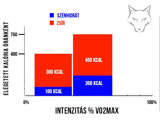zsírvesztés magas intenzitás vs alacsony intenzitás