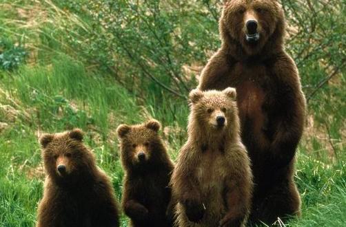 a medvék fogynak súlyos asztma és fogyás