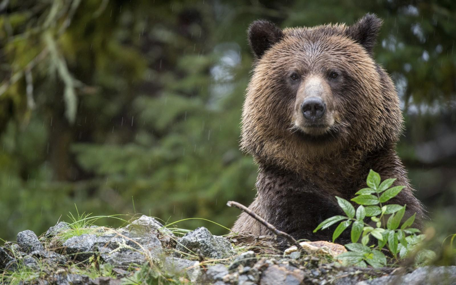a medvék fogynak szupermama karcsúsító anya
