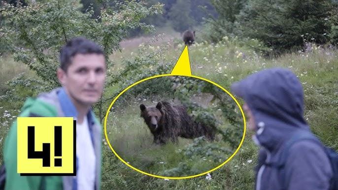 a medvék fogynak