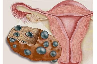 az ösztradiol segít a fogyásban