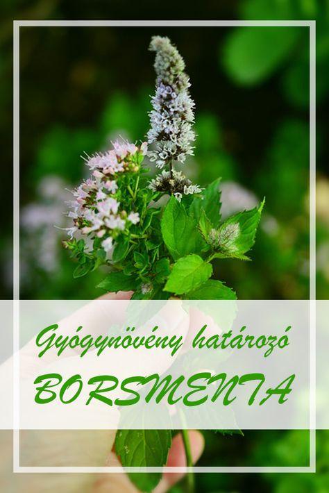 Hatékony fogyás gyógynövények Fogyás gyógynövények felhasználásával